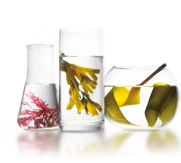 Algotherm, professzionális kozmetikum, alga, tengeri alga, masszázs, alakformálás, paraben mentes, masszőr képzés